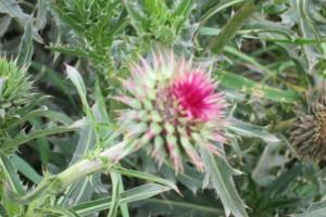 Una Flor Borrosa