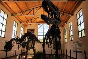 Giganotosaurio y Carnotauro