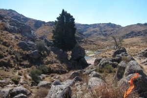 El Abedul del Valle del Abedul