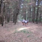 Uno de Tantos Bosques