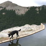 Perro de Montaña - PH: Sol