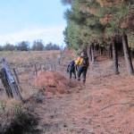Subida bordeando pinar