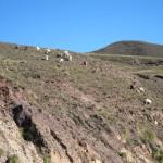 Bichos haciendo Trail