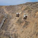 Cerro Champaqui: Vienen las Mulas