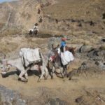 Cerro Champaqui: Se van las mula