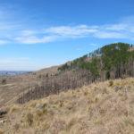 El pinar quemado